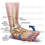 Sprained Ankles - Chiropractors in Southampton at The Avenue Clinic Give you the Best Up To Date Advice To Help You Recover.