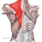 Muscle Of The Month: Trapezius