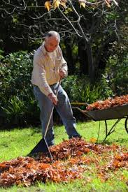 STORMS AND WIND PLAY HAVOC WITH THE GARDEN – How to survive the mess without getting back pain.